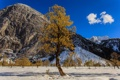 Картинка горы, осень, небо, снег, дерево