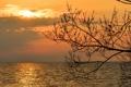 Картинка море, небо, ветки, дерево, рассвет, горизонт, силуэт
