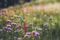 Картинка зелень, лето, трава, цветы, лепестки