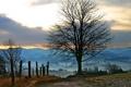 Картинка дорога, осень, лес, фото, дерево, забор, утро