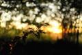 Картинка солнце, природа, блики, ветка