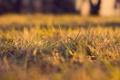 Картинка трава, макро, природа, фотографии, обои на рабочий стол