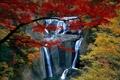 Картинка осень, лес, деревья, Водопад