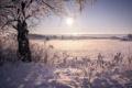 Картинка зима, пейзаж, дерево, утро