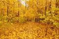 Картинка листья, деревья, nature, золотая осень, gold autumn