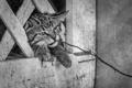 Картинка кот, морда, ветка, кошак, котяра