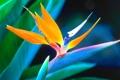 Картинка цветок, природа, растение, экзотика