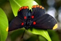 Картинка листья, бабочка, насекомое, butterfly, insect