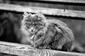 Картинка Кошка, чёрно-белый, пушистая, взгляд, дерево