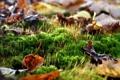 Картинка лес, листья, Мох, осень в лесу