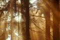 Картинка лес, лучи, свет, дримучий