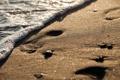 Картинка море, пляж, природа, боке