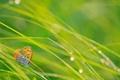 Картинка трава, капли, макро, блики, бабочка