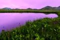 Картинка закат, цветы, горы, озеро, сша, полевые, колорадо