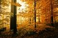 Картинка природа, лес, осень, листва