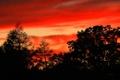Картинка облака, силуэт, небо, деревья, зарево