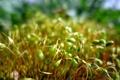 Картинка зелень, мох, боке