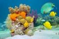 Картинка море, рыбы, кораллы, морское дно