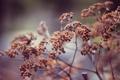 Картинка растение, куст, plants