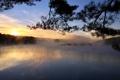 Картинка солнце, туман, озеро, дерево, рассвет, утро