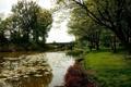 Картинка природа, пруд, мост, трава, деревья