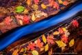 Картинка осень, макро, ручей, камни, листва