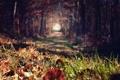 Картинка осень, лес, трава, листья, деревья, размытость, аллея