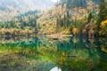 Картинка озеро, отражение, лес. деревья
