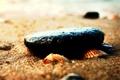 Картинка песок, ракушки, галька, пляж, макро, морская тематика, камни