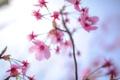 Картинка сад, весна, лепестки, ветка, цветы