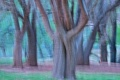 Картинка лес, трава, деревья, абстракция, штрих
