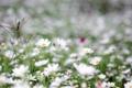 Картинка зелень, поле, трава, цветы, природа, поляна, нежность