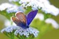 Картинка белый, цветок, макро, зеленый, бабочка, растение, синяя