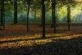 Картинка осень, лес, листья, деревья, Природа, лучики солнца