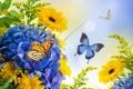 Картинка бутоны, цветение, бабочки, гортензия, лепестки, гербера, хризантемы