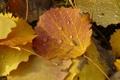 Картинка листья, оранжевый, желтый, капельки, Осень