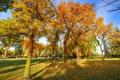 Картинка осень, небо, трава, листья, деревья, пейзаж, парк