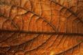 Картинка осень, Autumn, лист