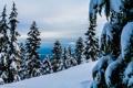 Картинка лес, снег, горы, природа