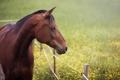 Картинка лето, морда, конь, лошадь, луг, профиль, изгородь