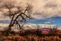 Картинка осень, небо, облака, горы, дерево