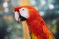 Картинка перья, клюв, попугай, bird, parrot, разноцветный, color