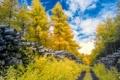 Картинка лес, осень, деревья, дорога, облака, небо, бревна