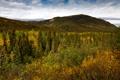 Картинка лес, деревья, горы, США, Alaska, Denali