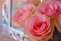 Картинка розы, лепестки, макро