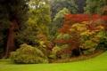 Картинка зелень, лес, трава, деревья, парк, Италия, кусты