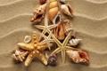 Картинка песок, волны, ракушки, морские звезды