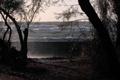 Картинка море, волны, деревья, брызги