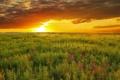 Картинка лето, небо, пейзаж, закат, природа