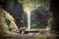 Картинка лес, водопад, landscape, горная река